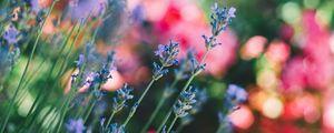 Превью обои цветы, полевой, стебли, размытость