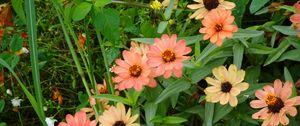 Превью обои цветы, растение, макро
