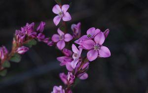Превью обои цветы, растение, макро, размытие