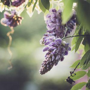 Превью обои цветы, ветки, листья, макро, фиолетовый