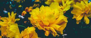 Превью обои цветы, желтый, бутоны