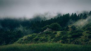 Превью обои туман, лес, деревья, трава, зеленый