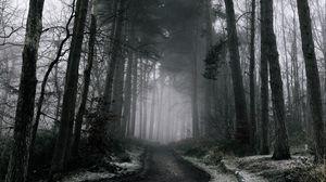 Превью обои туман, лес, деревья, зима, снег, ветки, мрачно