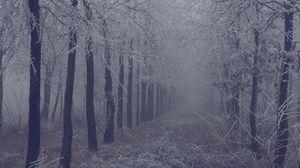 Превью обои туман, лес, иней, ветки, деревья, трава