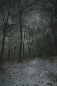 Превью обои туман, лес, тропинка, снег, осень, зима