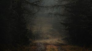 Превью обои туман, тропинка, ветки, лес, деревья, осень, мрачный