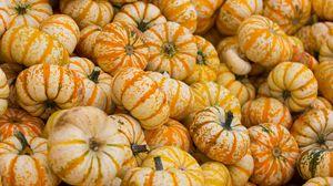 Превью обои тыква, осень, урожай, овощ