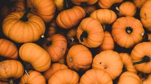 Превью обои тыква, спелый, оранжевый, урожай, осень