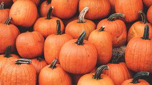 Превью обои тыква, урожай, осень, спелый, октябрь