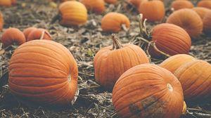 Превью обои тыквы, овощи, оранжевый, осень
