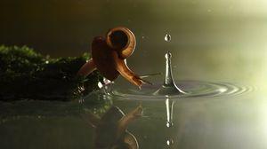 Превью обои улитка, капля, вода, панцирь