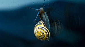 Превью обои улитка, моллюск, спираль, раковина