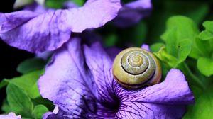 Превью обои улитка, моллюск, цветок, панцирь