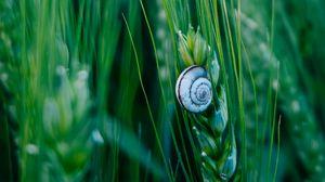Превью обои улитка, панцирь, макро, колосья, трава, зеленый