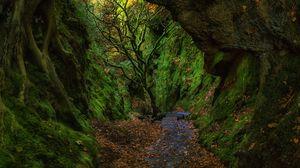 Превью обои ущелье, лестница, листва, мох, лестница дьявола, финнич, шотландия