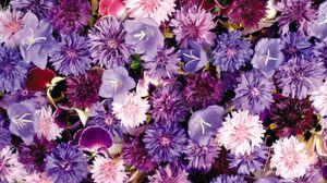 Превью обои васильки, анютины глазки, цветы, сиреневые, ассорти