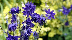 Превью обои васильки, цветы, поле, лето