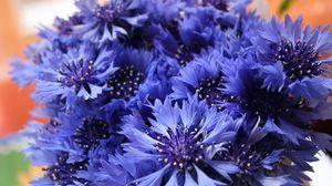 Превью обои васильки, цветы, полевые, букет, крупный план