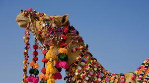 Превью обои верблюд, наряд, голова, небо