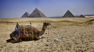 Превью обои верблюд, пирамиды, египет