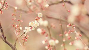 Превью обои весна, дерево, цветение, цветы