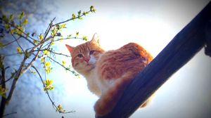 Превью обои весна, кот, природа, утро, солнце, усы