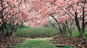 Превью обои весна, сад, цветение, деревья, розовый