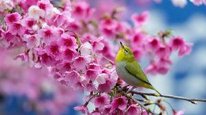 Превью обои весна, сакура, ветка, цветы, красота, японский белый глаз