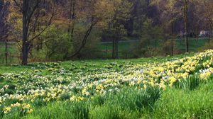 Превью обои весна, трава, цветы, природа