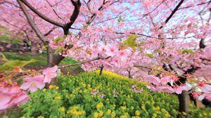 Превью обои весна, цветение, дерево, цветы