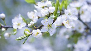 Превью обои весна, ветка, яблоня, цветущая