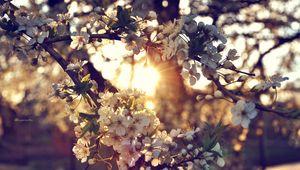 Превью обои ветка, цветы, весна