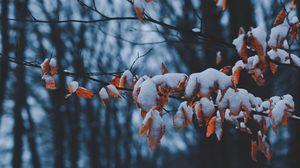 Превью обои ветки, листья, снег, зима