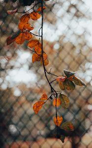 Превью обои ветка, листья, забор, сетка, осень, макро