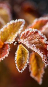 Превью обои ветка, листья, иней, мороз