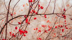 Превью обои ветки, ягоды, красный, растение