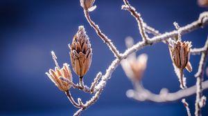 Превью обои ветки, иней, цветы