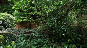 Превью обои ветки, кусты, растения, листья, природа