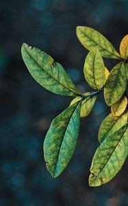 Превью обои ветки, листья, макро, осень, зеленый