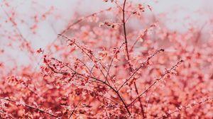 Превью обои ветки, листья, светлый, весна, небо