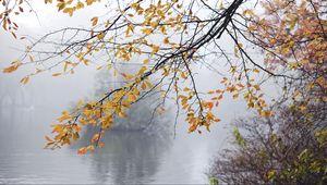 Превью обои ветки, листья, туман, осень