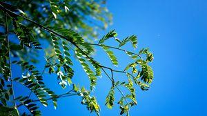 Превью обои ветки, листья, макро, небо