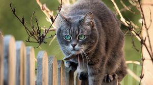 Превью обои ветки, морда, кошка, забор
