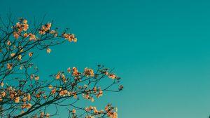 Превью обои ветки, небо, минимализм