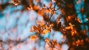 Превью обои ветки, размытость, осень, листья