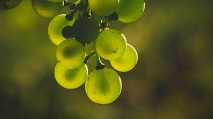 Превью обои виноград, гроздь, зеленый, размытость, блики