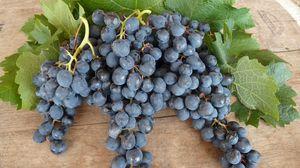 Превью обои виноград, лист, ягоды