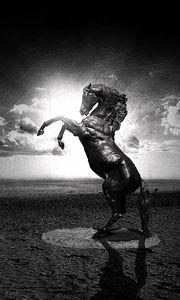 Превью обои вода, черный, белый, лошадь, абстракция