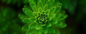 Превью обои водоросли, растение, макро, крупным планом