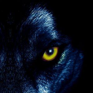 Превью обои волк, глаза, хищник, взгляд